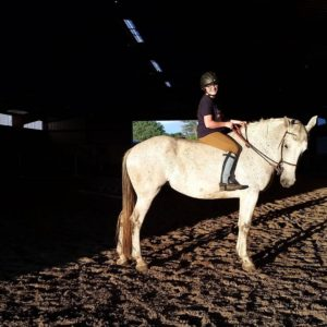 Queue Percheron Standardbred for sale